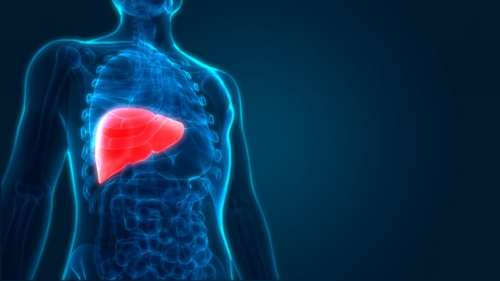 Picture of a human liver