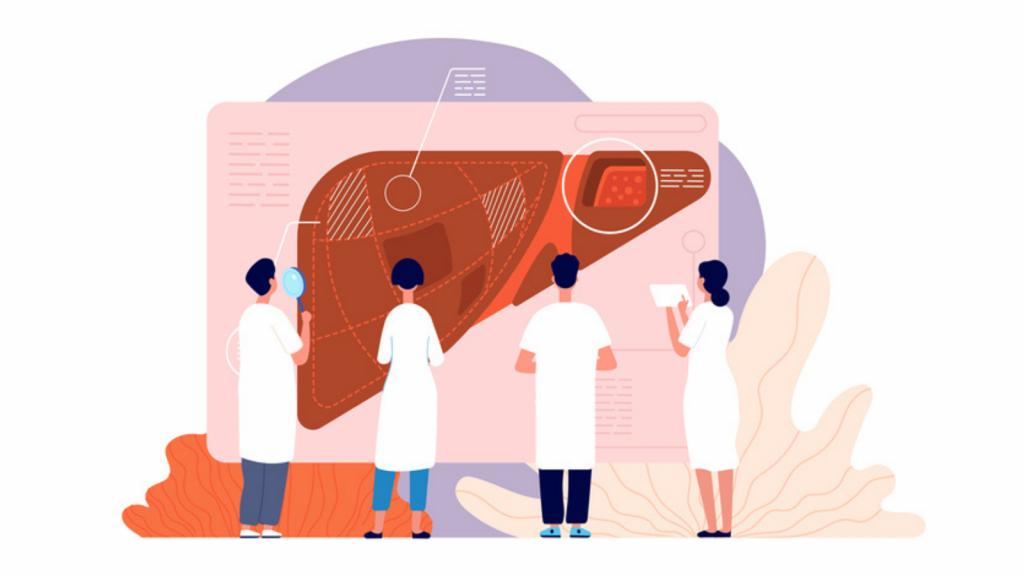 Illustration of a human liver